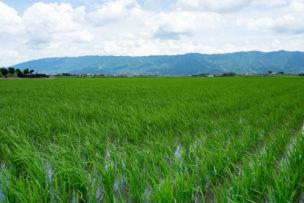 農業事業承継